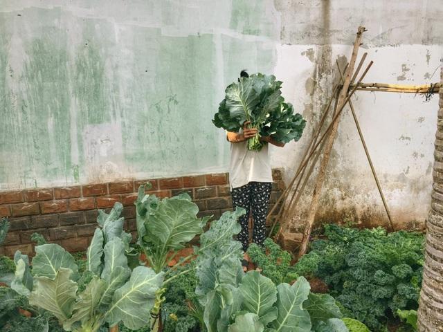 Gia đình ở Đắk Lắk rời phố thị, về quê làm vườn bội thu rau trái - 7