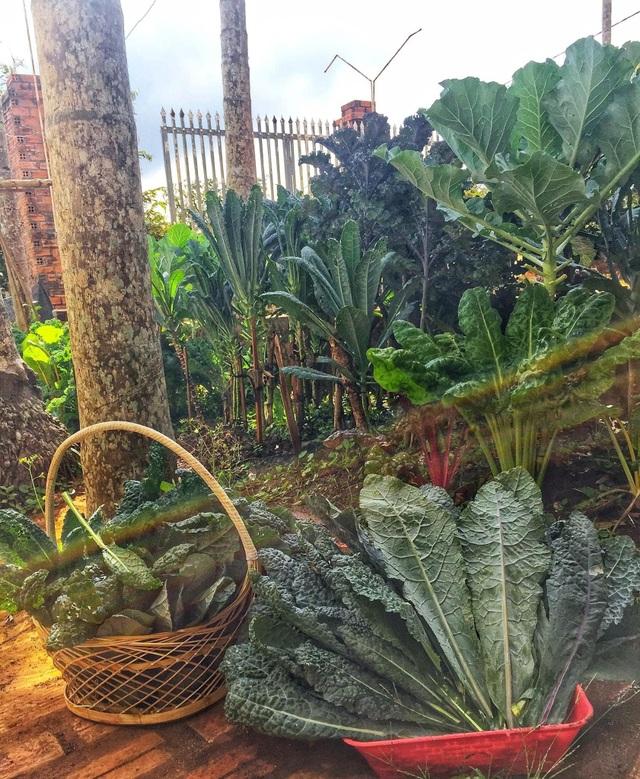 Gia đình ở Đắk Lắk rời phố thị, về quê làm vườn bội thu rau trái - 9