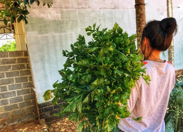 Gia đình ở Đắk Lắk rời phố thị, về quê làm vườn bội thu rau trái - 11