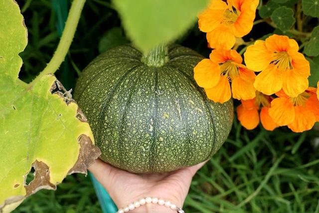 Rau tươi, trái ngọt trĩu trịt trong vườn nhà của cô gái ở Australia - 6
