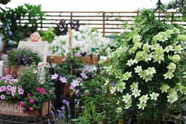 Mẹ cùng con gái biến sân thượng thành thiên đường trăm loài hoa - 11