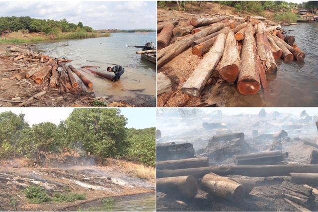 Hàng trăm cây gỗ tại công trường gỗ lậu bị đốt, tẩu tán dưới lòng hồ - 1
