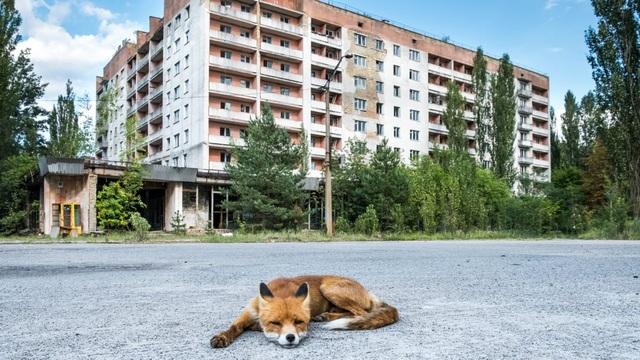 35 năm và sự thật về cuộc sống hồi sinh sau thảm họa hạt nhân ở Chernobyl - 3