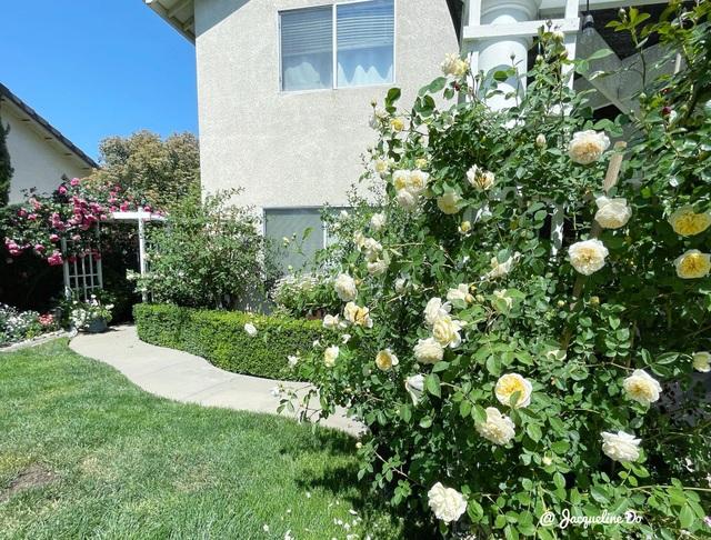 Ngắm vườn ngàn gốc hoa khoe sắc quanh năm của mẹ Việt ở Mỹ - 1