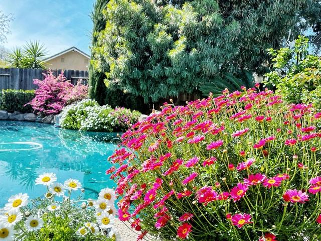 Ngắm vườn ngàn gốc hoa khoe sắc quanh năm của mẹ Việt ở Mỹ - 2