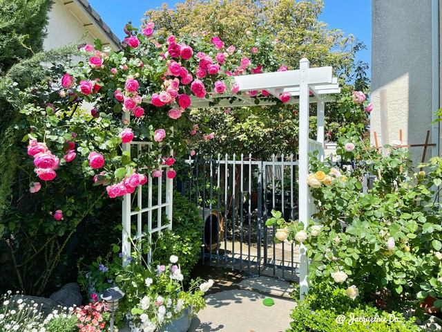 Ngắm vườn ngàn gốc hoa khoe sắc quanh năm của mẹ Việt ở Mỹ - 3