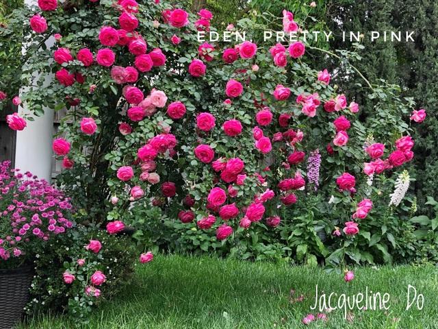 Ngắm vườn ngàn gốc hoa khoe sắc quanh năm của mẹ Việt ở Mỹ - 5