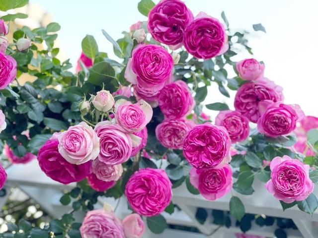Ngắm vườn ngàn gốc hoa khoe sắc quanh năm của mẹ Việt ở Mỹ - 9