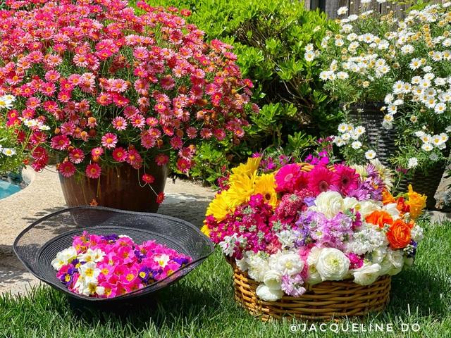 Ngắm vườn ngàn gốc hoa khoe sắc quanh năm của mẹ Việt ở Mỹ - 10
