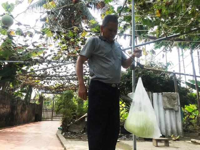 Giàn bầu cho trái khổng lồ nặng 15kg/ quả độc lạ ở Hải Phòng - 7