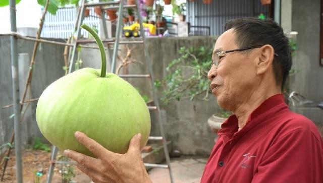 Giàn bầu cho trái khổng lồ nặng 15kg/ quả độc lạ ở Hải Phòng - 9