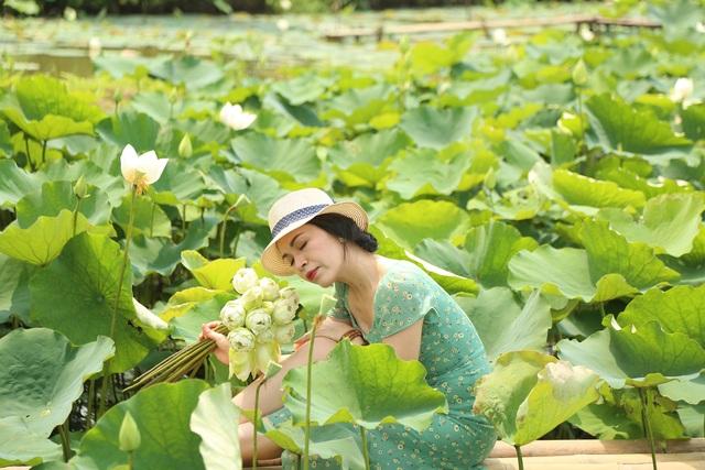 Hà Nội: Kiếm tiền triệu từ nghề trồng hoa sen trắng - 8