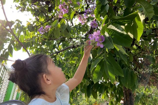 Hoa bằng lăng rực nở, nhuộm tím đường phố Sài Gòn - 9