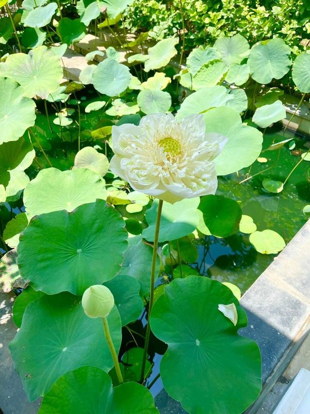 Khu vườn 300m2, bốn mùa ngập sắc hoa ở Vũng Tàu - 3