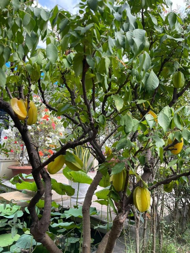 Khu vườn 300m2, bốn mùa ngập sắc hoa ở Vũng Tàu - 9