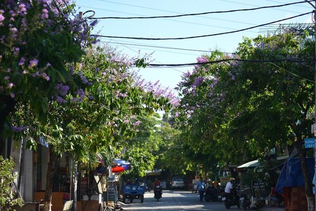 Hoa bằng lăng rực nở, nhuộm tím đường phố Sài Gòn - 1