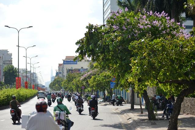 Hoa bằng lăng rực nở, nhuộm tím đường phố Sài Gòn - 3