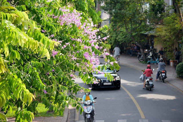 Hoa bằng lăng rực nở, nhuộm tím đường phố Sài Gòn - 2