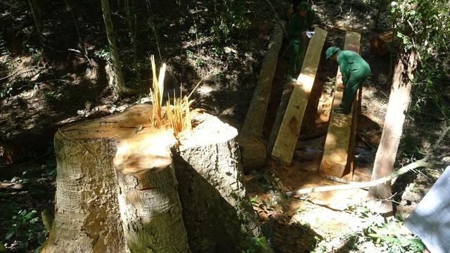 Khởi tố 37 lâm tặc phá rừng tại khu bảo tồn thiên nhiên - 2