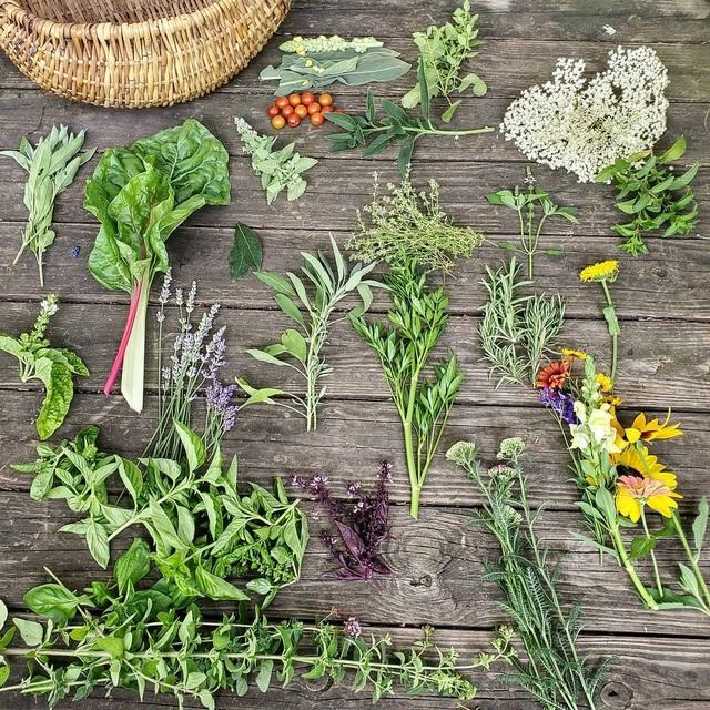 Ấn tượng khu vườn rộng lớn đủ loại hoa trái của đại gia đình 9 người - 5