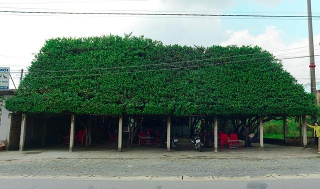 Những quán cà phê độc lạ, thiết kế có một không hai ở Việt Nam - 6