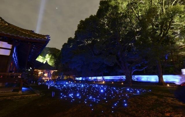 Lễ hội ánh sáng huyền ảo Higashiyama Hanatoro - 3