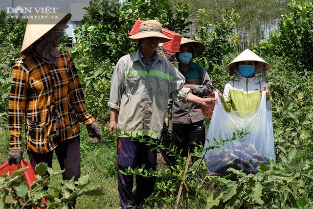 Vườn chanh Thái trồng chỉ để bán lá thu tiền tỷ của anh nông dân ở Đồng Nai - 3