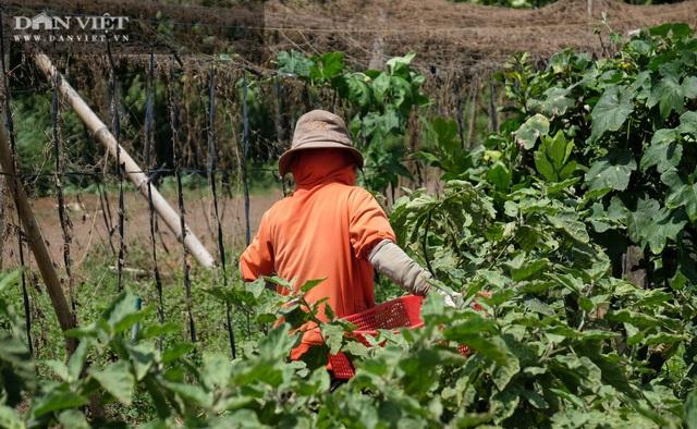 Vườn chanh Thái trồng chỉ để bán lá thu tiền tỷ của anh nông dân ở Đồng Nai - 6