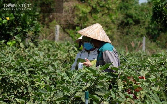 Vườn chanh Thái trồng chỉ để bán lá thu tiền tỷ của anh nông dân ở Đồng Nai - 9