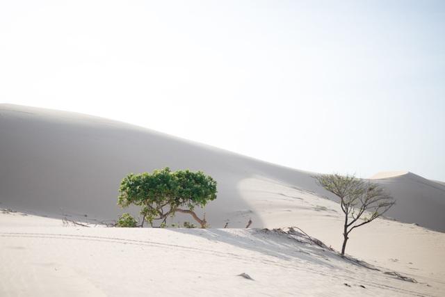 Khám phá 2 đồi cát đẹp như tranh, đứng góc nào cũng có ảnh đẹp - 2