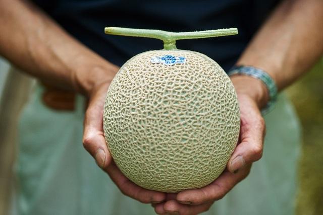 Nông dân cho dưa nằm điều hòa, có thành quả siêu đắt đỏ khi bán ra - 1