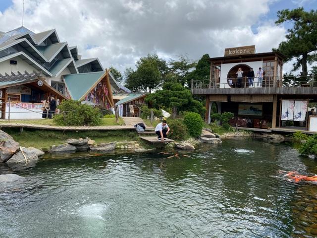 Vừa uống cà phê vừa ngắm cá Koi khủng giữa phố núi Đà Lạt - 1