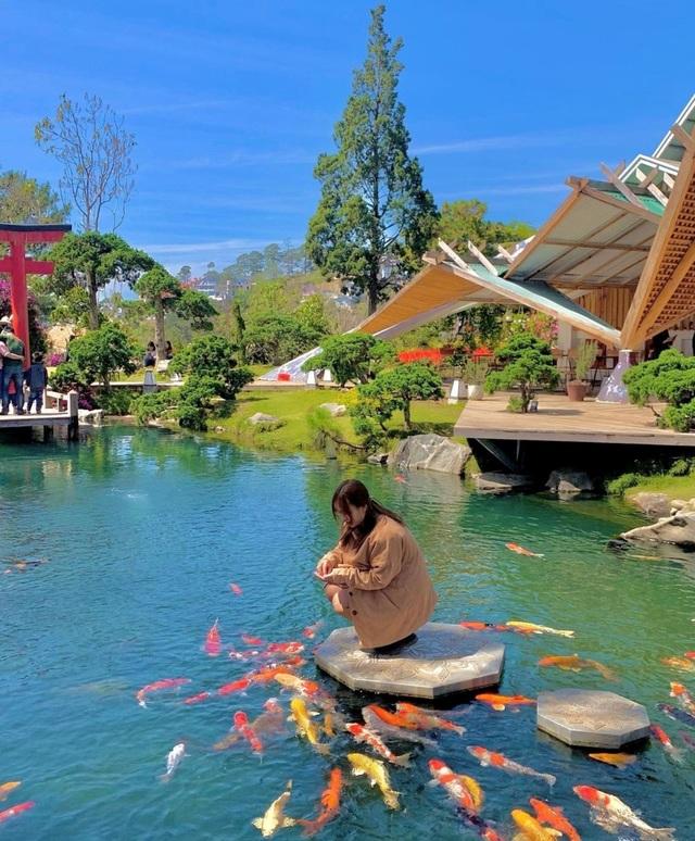 Vừa uống cà phê vừa ngắm cá Koi khủng giữa phố núi Đà Lạt - 2
