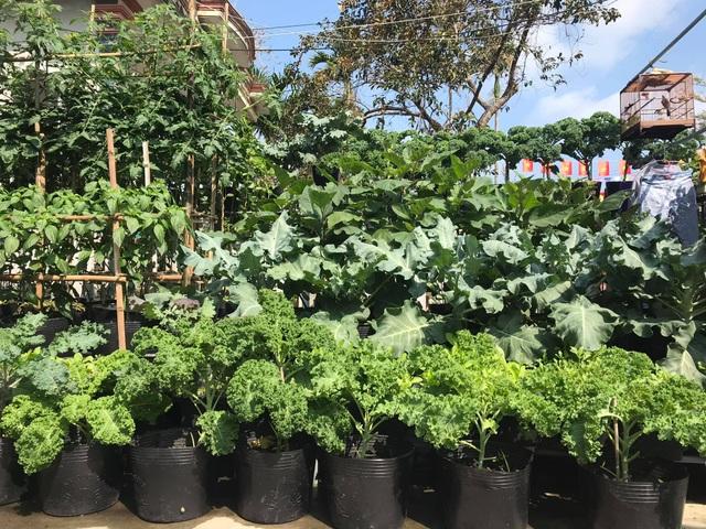 Vườn 60m2 đủ loại rau trái, vợ chồng trẻ ở Quảng Nam không phải đi chợ - 1