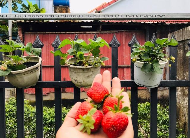 Vườn 60m2 đủ loại rau trái, vợ chồng trẻ ở Quảng Nam không phải đi chợ - 4