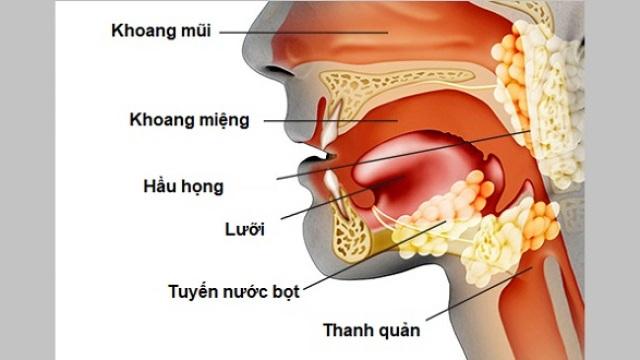 Khoảng 35-75% trong số người bệnh mắc ung thư đầu mặt cổ bị suy dinh dưỡng - 1