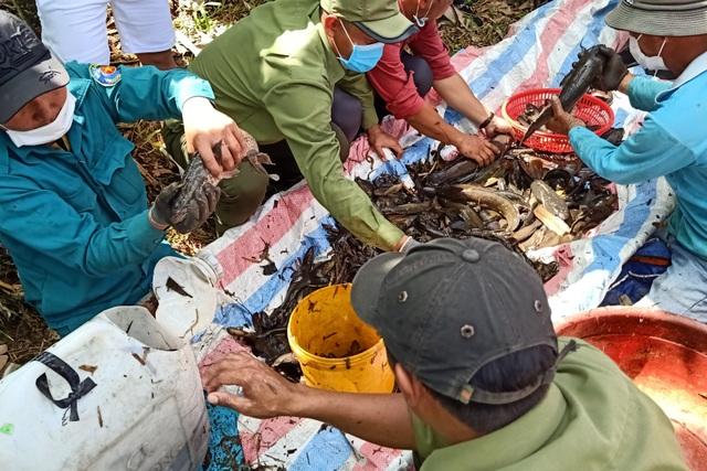 Xem người dân miền Tây bắt cả trăm ký cá đầy sáng tạo  - 10