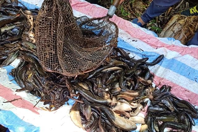 Xem người dân miền Tây bắt cả trăm ký cá đầy sáng tạo  - 9