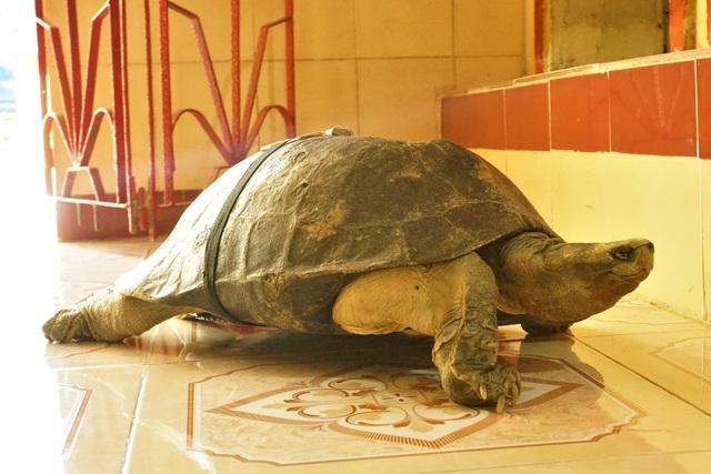Lạ kỳ ngôi chùa có những cụ rùa trăm tuổi... ăn chay, ngủ mùng - 1