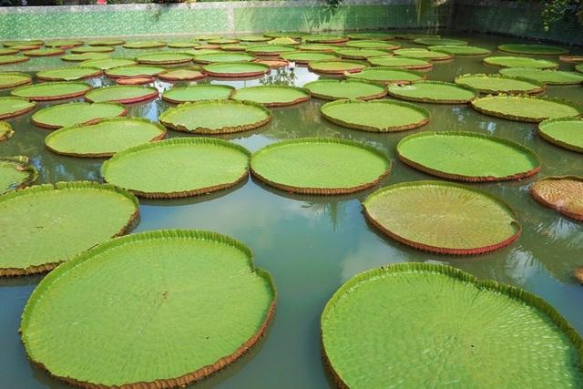 Lạ kỳ ngôi chùa có những cụ rùa trăm tuổi... ăn chay, ngủ mùng - 4