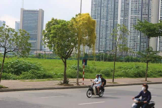 Hà Nội: Dây tơ hồng quấn như ma trận đe dọa một loạt cây xanh - 6