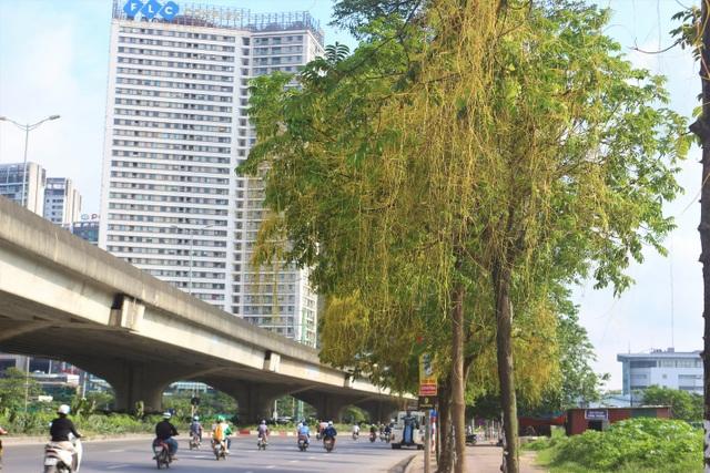 Hà Nội: Dây tơ hồng quấn như ma trận đe dọa một loạt cây xanh - 8