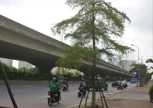 Hà Nội: Dây tơ hồng quấn như ma trận đe dọa một loạt cây xanh - 9