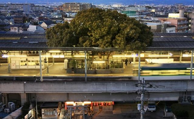 Ga tàu điện ngầm xây dựng quanh cây long não 700 năm tuổi ở Nhật Bản - 2