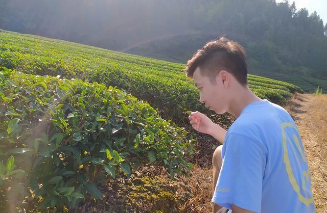Chàng trai trẻ tậu ô tô, làm giàu nhờ về quê khởi nghiệp từ bán trà - 1