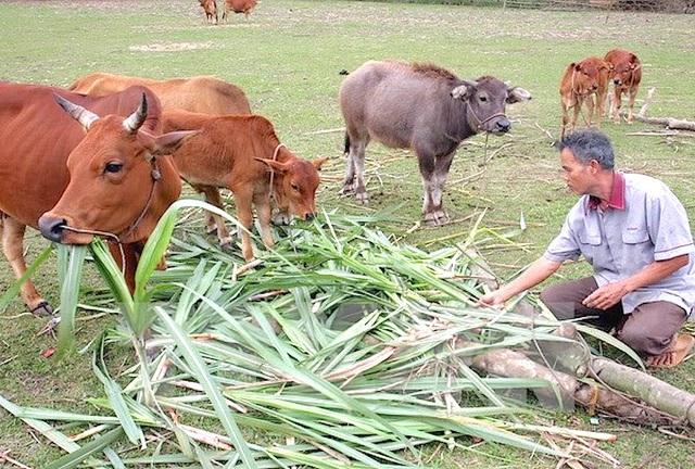 Nghệ An: Phấn đấu có 95% người dân tham gia BHYT vào năm 2025 - 1