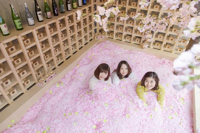Ngâm mình trong 1,2 triệu cánh hoa sakura giữa lễ hội mùa xuân - 4