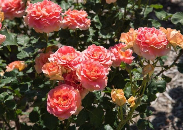 Ghé thăm những cánh đồng hoa xuân đẹp ngoạn mục ở Kansai - 3