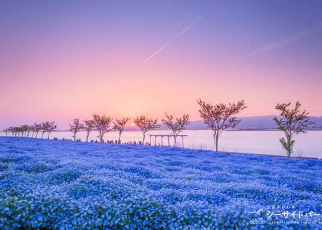 Ghé thăm những cánh đồng hoa xuân đẹp ngoạn mục ở Kansai - 1