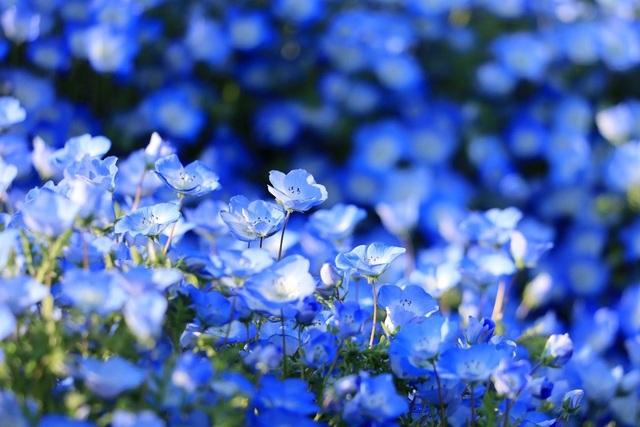 Ghé thăm những cánh đồng hoa xuân đẹp ngoạn mục ở Kansai - 2